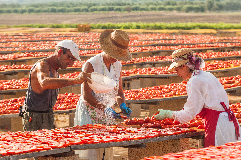 lavorazione pomodori secchi